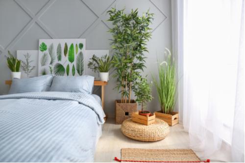 Grote kamerplanten - De Carlton