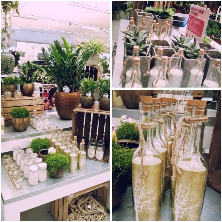 Kamerplanten nabij Den Haag Tuincentrum De Carlton