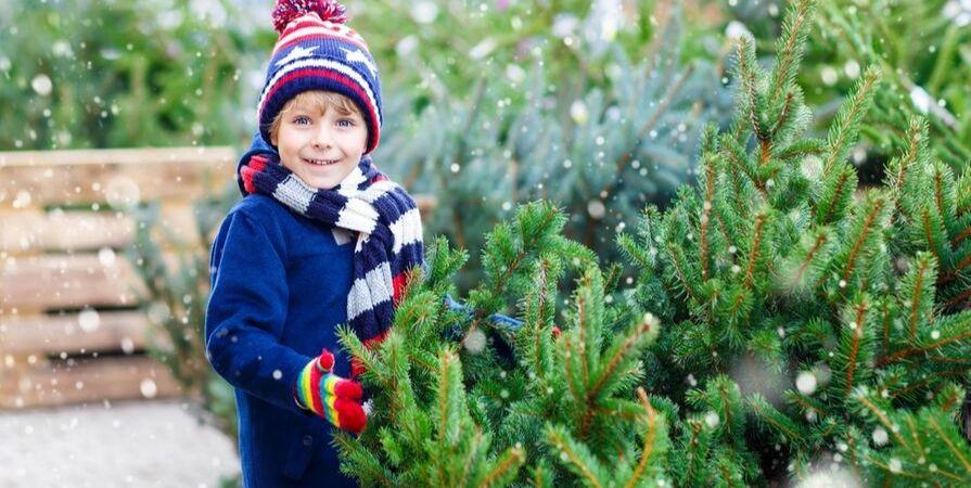 Kerstbomen_Tuincentrum De Carlton