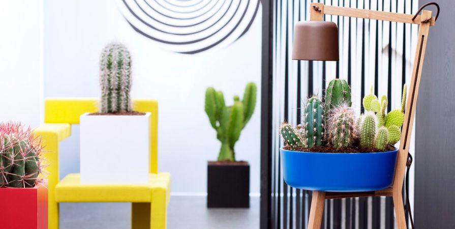 Cactussen en vetplanten_De Carlton