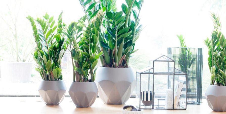 Groene kamerplanten_Tuincentrum De Carlton