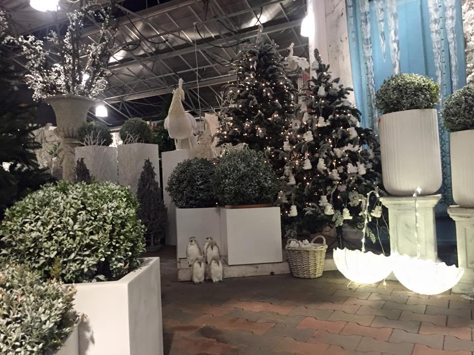 Kerstboom kopen op onze kerstmarkt dichtbij Den Haag?