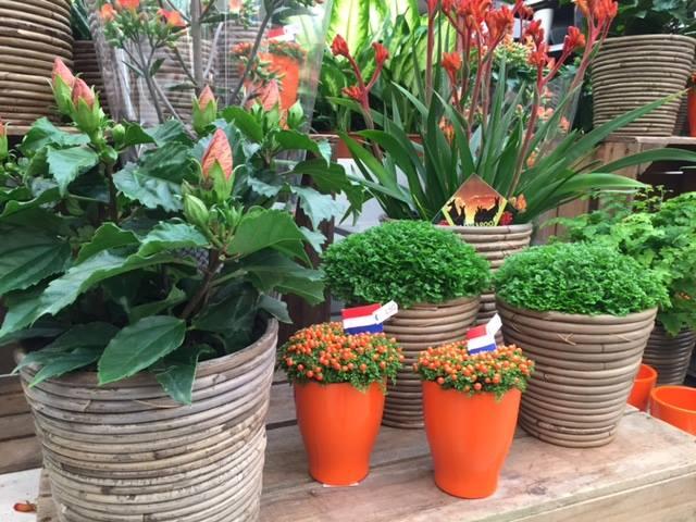 Planten Tuincentrum De Carlton nabij Den Haag