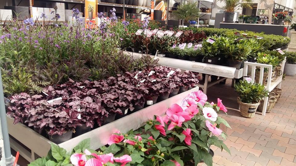Uitgebreid tuincentrum in de buurt van Delft